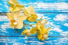 Een tak van gele orchidee?n royalty-vrije stock foto