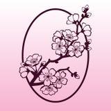 Een tak van kers of sakura komt tot bloei Laser scherp malplaatje Stock Foto