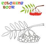 Een tak van lijsterbes - Kleurend Boek Royalty-vrije Stock Afbeeldingen