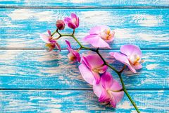 Een tak van purpere orchidee?n royalty-vrije stock fotografie