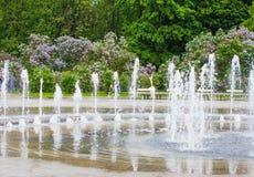 Een tak van sirenes op een boom in een tuin, park Royalty-vrije Stock Foto's