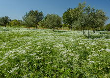 Een tapijt van de lentebloemen Royalty-vrije Stock Foto