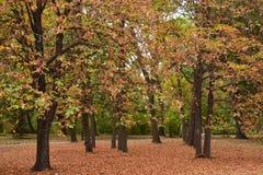 Een tapijt van doorbladert tussen de bomen Stock Foto