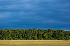 Een tarwegebied in Juli bij zonneschijn voor een bos met Dr. Stock Foto