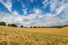 Een Tarwegebied op Sunny Summers Day royalty-vrije stock afbeeldingen