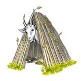 Een tevreden witte geit met hoornen en een baard, die uit de hut kijkt Gekleurde met de hand geschilderde vectortekening royalty-vrije illustratie
