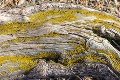 Een textuur van een boomboomstam met mos stock foto