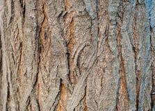 Een textuur van de boomboomstam Royalty-vrije Stock Afbeelding