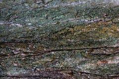 Een textuur van saai mos op de schors royalty-vrije stock afbeelding