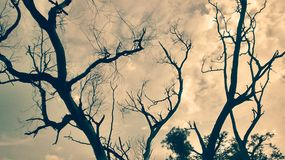 Een tint die overal de hemel uitspreiden Stock Fotografie