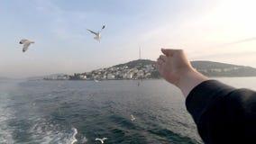 Een toerist berijdt op een boot en werpt broodcrumbs in de lucht, voedt de meeuwen stock footage