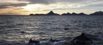 Een Toneel Oceaanmening van een Dolfijnpeul dichtbij San Carlos, Sonora, me stock fotografie