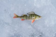Een toppositie met stukken van ijs ving terwijl de visserij op het ijs van Meer Baikal in de winter is Royalty-vrije Stock Foto's