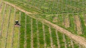 Een tractor beweegt zich in een wijngaard stock fotografie