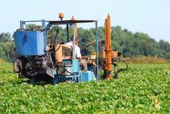 Een tractor in de wijngaard stock afbeeldingen