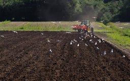 Een tractor ploegt het gebied in een zonnige de lentedag die die het stof opheffen, door zeemeeuwen wordt gevolgd royalty-vrije stock foto's