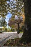 Een tree-lined tuin met bladeren Stock Foto's