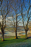 Een trio van bomen Royalty-vrije Stock Afbeelding