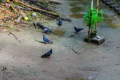 Een troep van duiven in het park royalty-vrije stock foto
