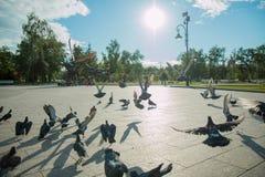 Een troep van duiven vliegt in het park in het midden van een heldere zon en een fontein in duidelijk weer Stock Afbeeldingen