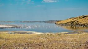 Een troep van flamingo's bij Meer Magadi, Kenia royalty-vrije stock afbeeldingen