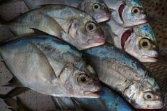 Een troep van grijze overzeese verse vissen in tegenovergestelde richting bij het restaurant: de vissen liggen diagonaal, creëren Royalty-vrije Stock Afbeeldingen
