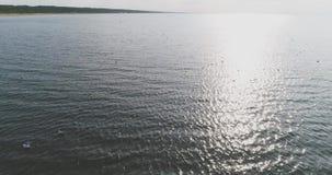 Een troep van meeuwen vliegt in het overzees, luchtmening, langzame motie stock footage