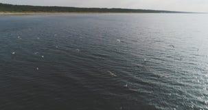 Een troep van meeuwen vliegt in het overzees, luchtmening, langzame motie stock video