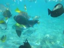 Een troep van tropische overzeese vissen in blauw water stock video