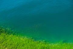 Een troep van vissen in mooi groenachtig-blauw water met een steenachtig slib behandelde rotsachtige kust stock fotografie