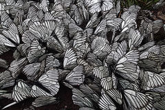 Een troep van vlinders Royalty-vrije Stock Foto's