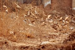 Een troep van vogels Royalty-vrije Stock Fotografie