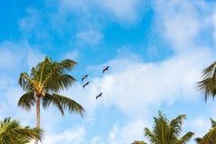 Een troep van vogels in de blauwe hemel in Punta Cana, La Altagracia, Dominicaanse Republiek Exemplaarruimte voor tekst Stock Foto's