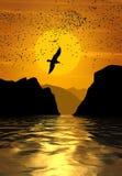 Een troep van vogels die bij zonsondergang vliegen stock fotografie