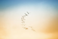 Een troep van vogels die in de hemel vliegen Royalty-vrije Stock Foto's