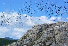 Een troep van vogels over de klip Royalty-vrije Stock Afbeelding