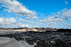 Een troep van vogels over het overzees Royalty-vrije Stock Afbeelding
