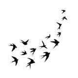 Een troep van vogels (slikt) gaat uit Zwart silhouet op een witte achtergrond Royalty-vrije Stock Foto