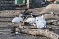 Een troep van wilde vogels royalty-vrije stock foto