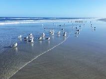 Een troep van zeemeeuwen en sternen bij de oever Stock Foto's