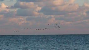 Een troep van zeemeeuwen op de Zwarte Zee, 2016 stock video