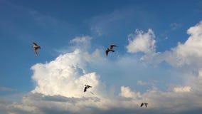 Een troep van zeemeeuwen vliegt tegen de mooie bewolkte hemel, langzame motie stock videobeelden