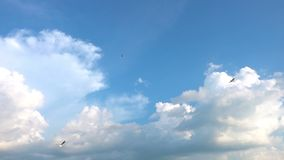 Een troep van zeemeeuwen vliegt tegen de mooie bewolkte hemel, langzame motie stock video