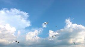 Een troep van zeemeeuwen vliegt tegen de mooie bewolkte hemel, langzame motie stock footage