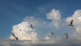 Een troep van zeemeeuwen vliegt tegen de mooie bewolkte hemel, langzame motie, Vangst tijdens de vlucht voedsel stock footage