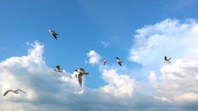 Een troep van zeemeeuwen vliegt tegen de mooie bewolkte hemel, langzame motie, Vangst tijdens de vlucht voedsel stock video