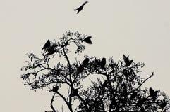 Een troep van zwarte vogels op de bovenkant van een boom Stock Fotografie