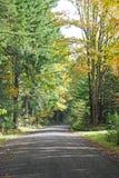 Een troosteloze bosweg. Royalty-vrije Stock Foto