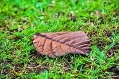 Een tropisch blad ligt op de grond Stock Afbeeldingen