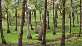 Een tropisch palmbosje met een weg in het midden Stock Fotografie